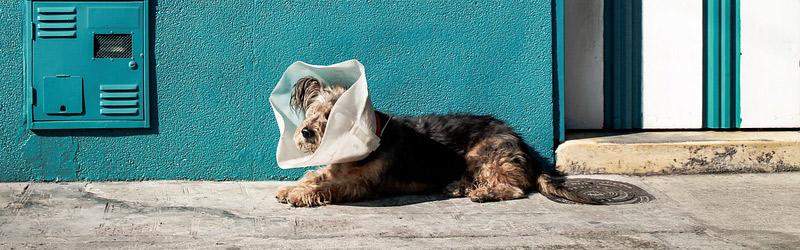 Come arredare il tuo studio veterinario